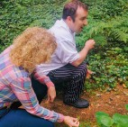 foraging sorrel
