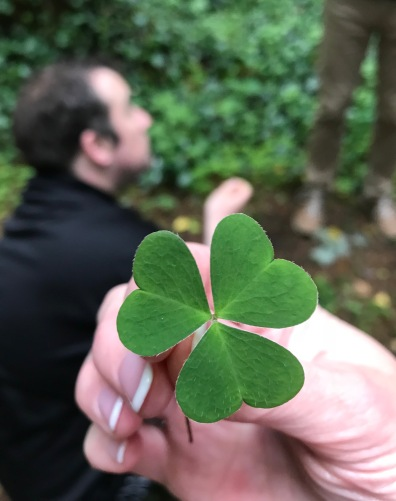 Irish clovers
